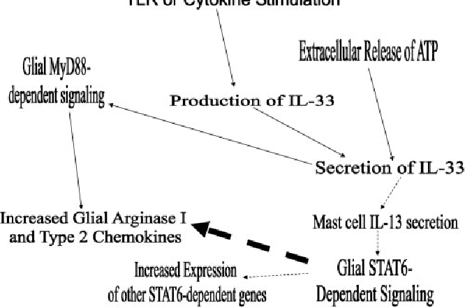 fig  10  mechanisms of il-33 induction of innate type 2 immunity in