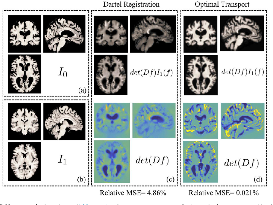 Figure 3 for Discovery and visualization of structural biomarkers from MRI using transport-based morphometry