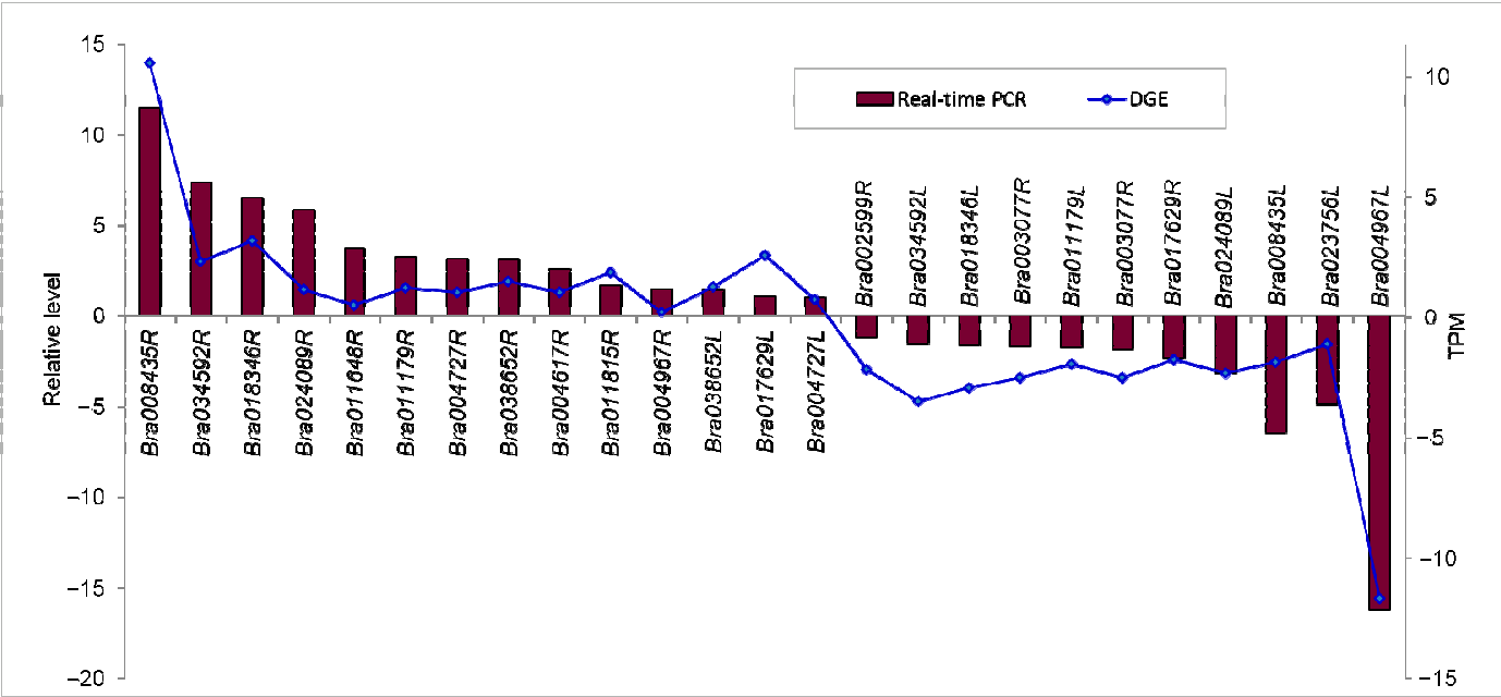 Figure 7. Real-time PCR validations of tag-mapped genes in root (R) and leaf (L). Relative level, (2−ΔCt·ΔCt); TPM, log2 Ratio (DS/CK).