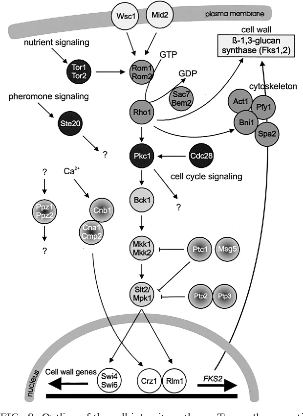 Figure 8 From Osmotic Stress Signaling And Osmoadaptation In Yeasts