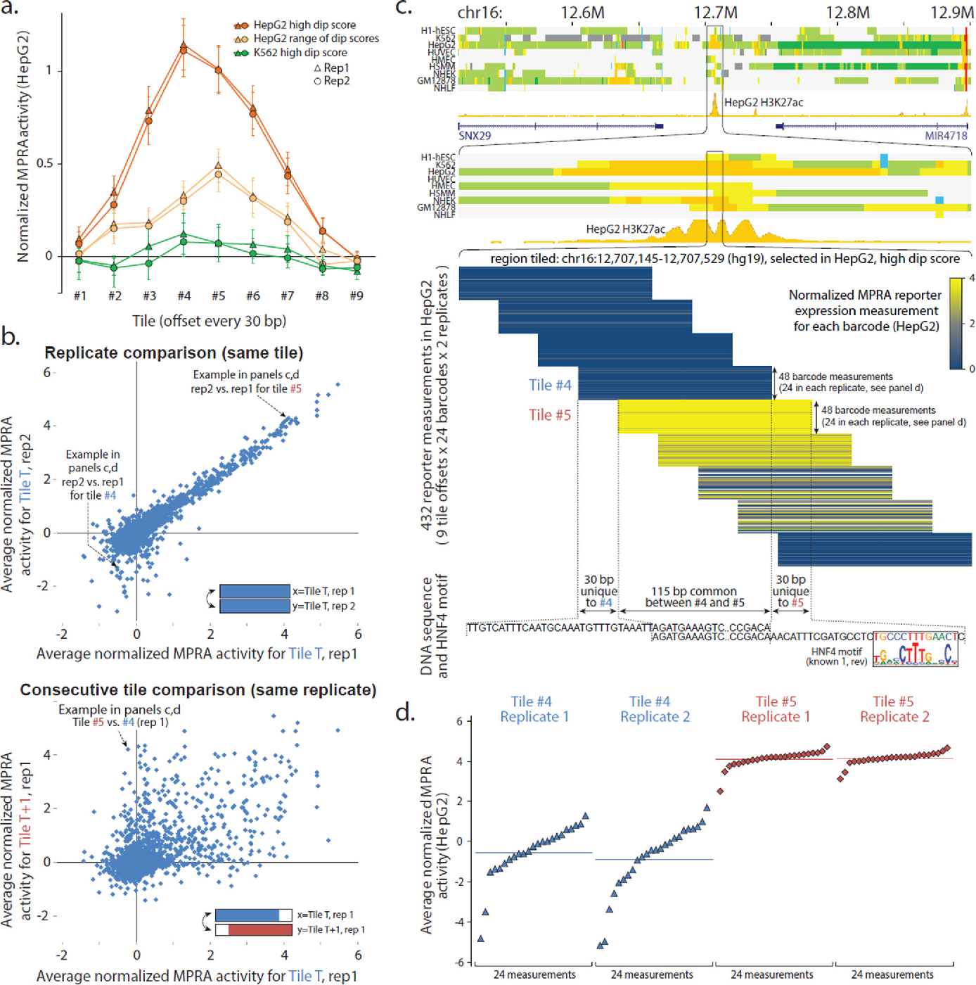 Figure 2 from Genome-scale high-resolution mapping of activating and
