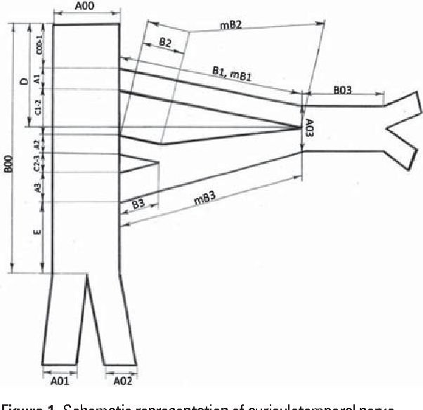 Figure 1 From Clinical Anatomy Of The Auriculotemporal Nerve In The