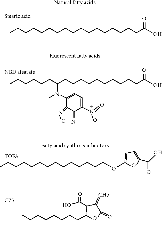 Inhibitors Of Fatty Acid Synthesis Induce Ppar Regulated Fatty Acid