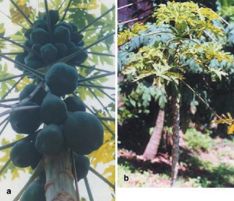biotechnology in plant science zaitlin milton