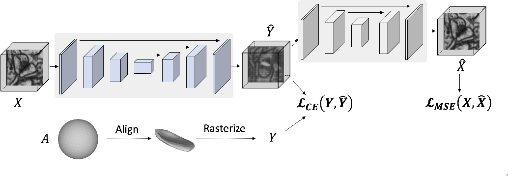 Figure 1 for Weakly Supervised Volumetric Image Segmentation with Deformed Templates