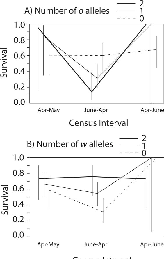 Figure 4: Additive effect of color alleles on apparent survival probability (SE) for cohorts of adult males at Gabas (2002–2005). Males with more o alleles had lower survival across years (June–April census), while males with more w alleles had higher survival relative to males with y alleles (0 on both scales). Survival across years is estimated from the census labeled June–April (center of the plot). Only three survival episodes can be computed from four recapture periods, and survival in the final (third), fairly short episode (labeled April–June) is confounded with catchability (White 2005), which is very high (0.91) in the Gabas population.