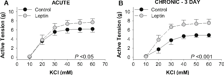 Fig. 1 Leptin augments depolarization-induced coronary artery contractions. Acute (30 min) exposure to leptin (30 ng/mL) increased KCl-induced contractions *1.3 g at doses[40 mM (n = 9, a). Chronic (3 day culture in serum-free media) leptin administration (30 ng/mL) increased tension development *2.5 g at doses[40 mM (n = 4, b)