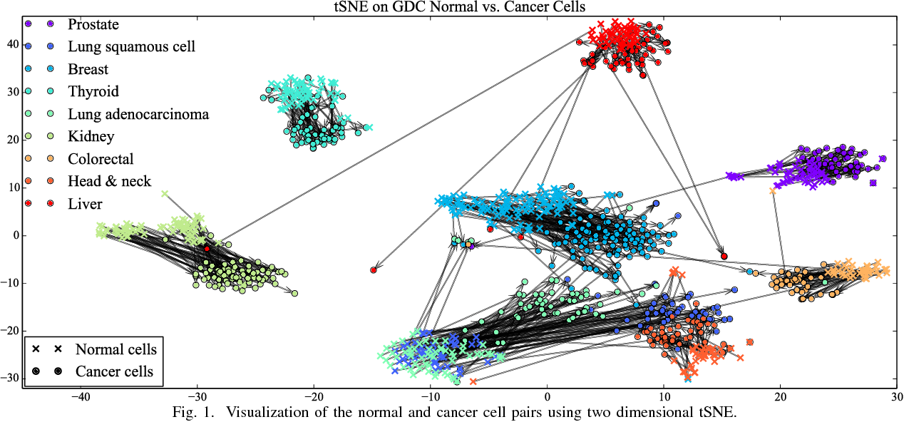 Figure 1 for Distinguishing between Normal and Cancer Cells Using Autoencoder Node Saliency