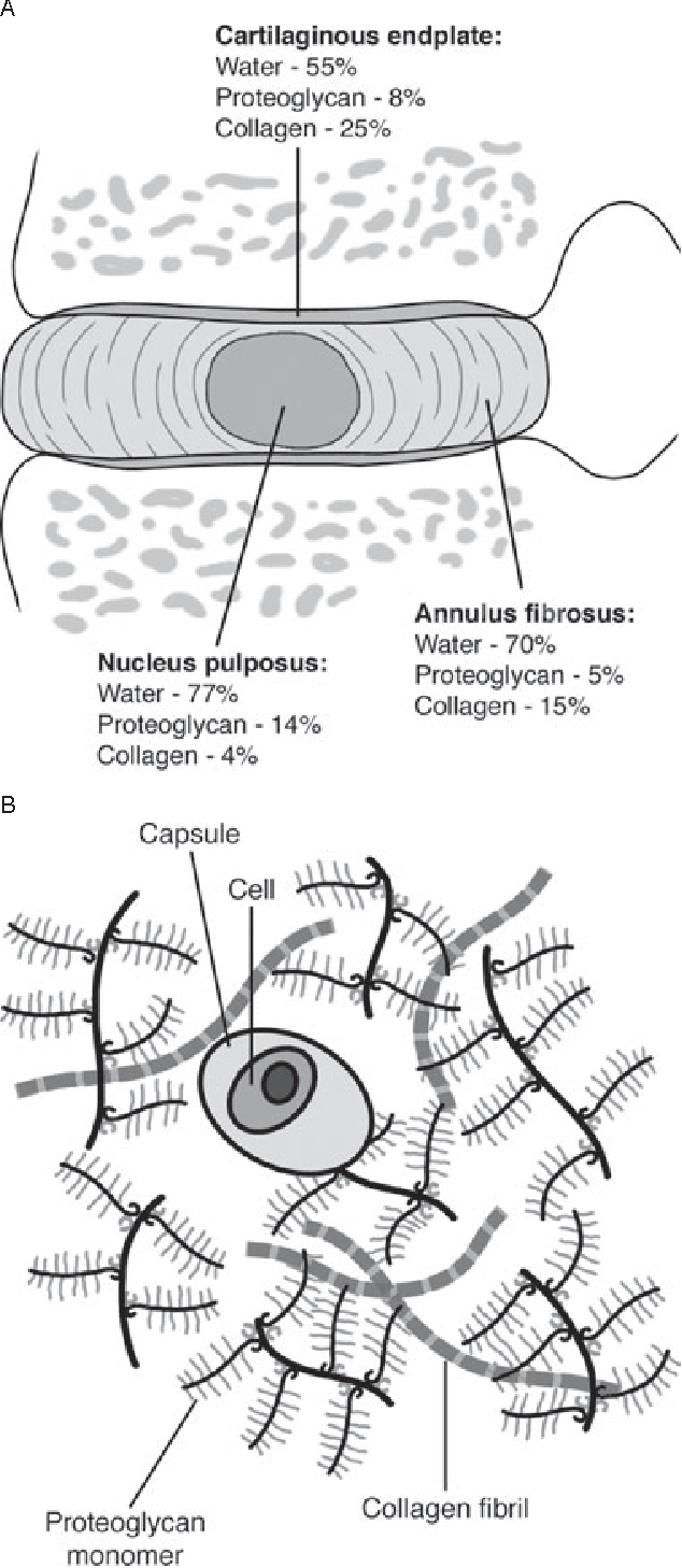 Figure 10 from Intervertebral disc: anatomy-physiology ...