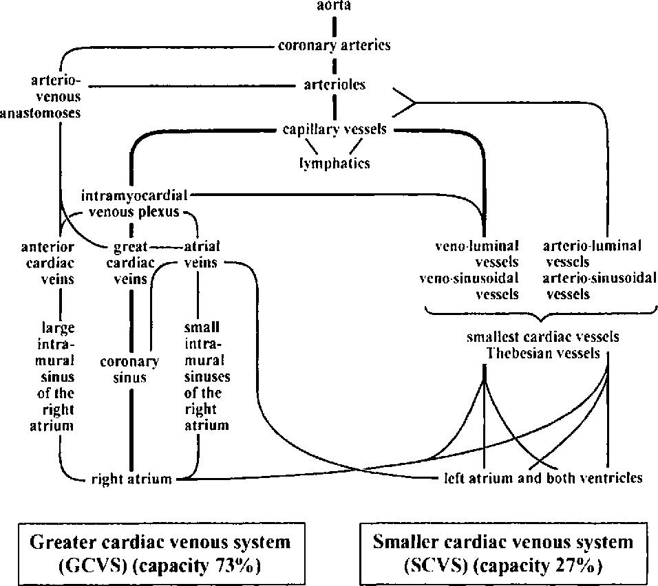The Venous Drainage of the Human Myocardium - Semantic Scholar