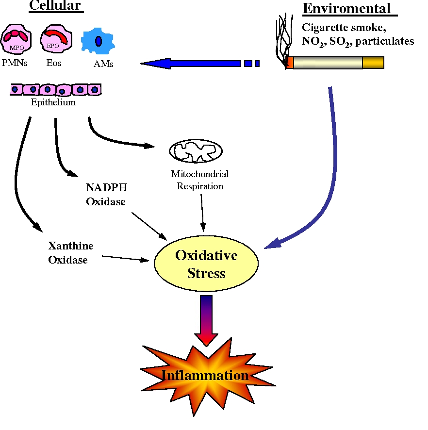 Therapeutic Strategies in COPD as a Systemic Disease