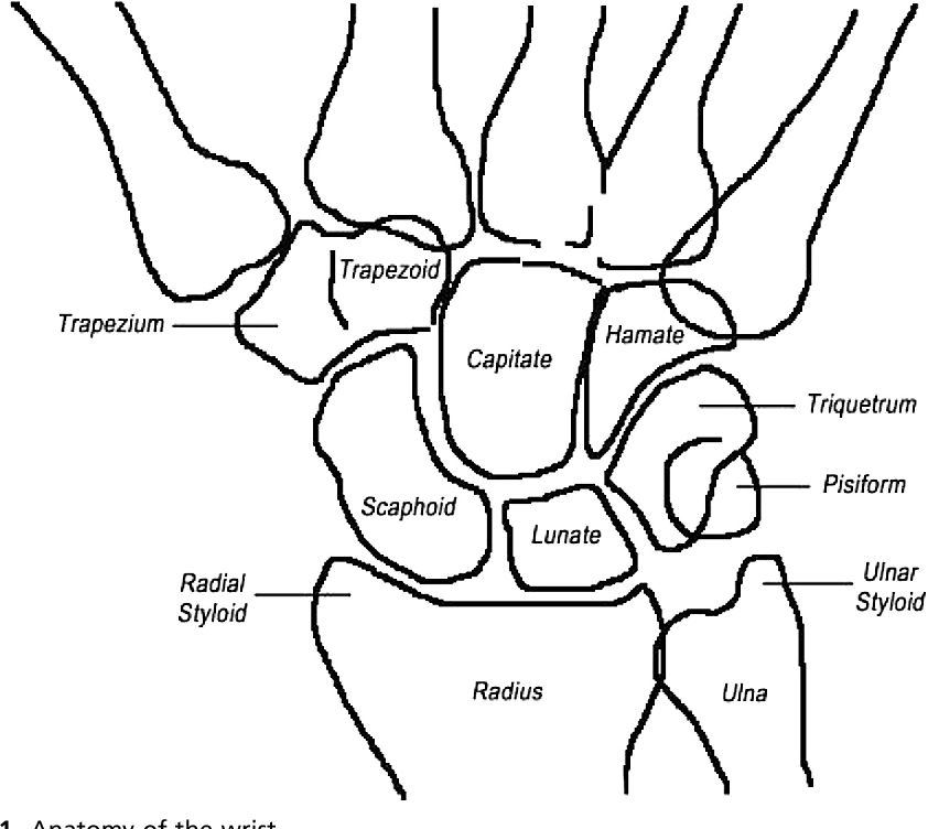 Figure 1 From Treatment Of Hand And Wrist Injuries