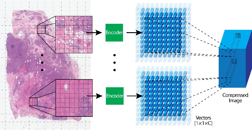 Figure 1 for Extending Unsupervised Neural Image Compression With Supervised Multitask Learning