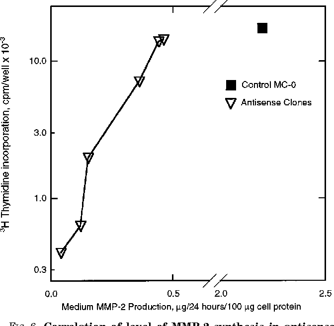 Correlation Of Level MMP 2 Synthesis In Antisense Clones And