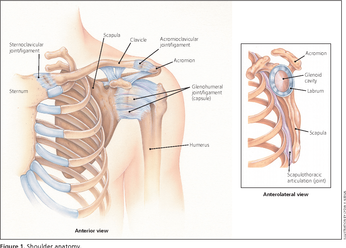 Figure 1 from Acute Shoulder Injuries in Adults. - Semantic Scholar