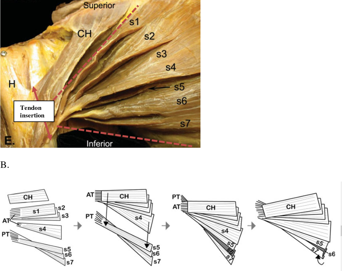 Figure 1.2 from Suture Technique Influences the Biomechanical ... on