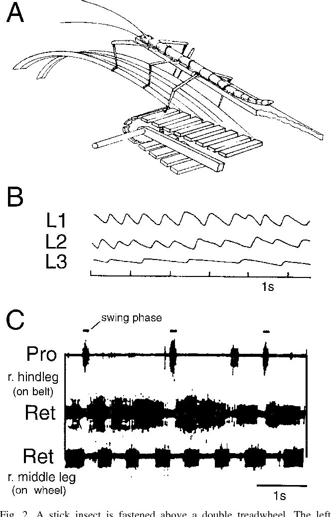 Pattern Generation For Stick Insect Walking Movements Multisensory