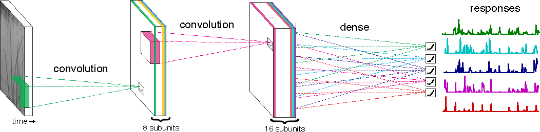 Figure 1 for Deep Learning Models of the Retinal Response to Natural Scenes