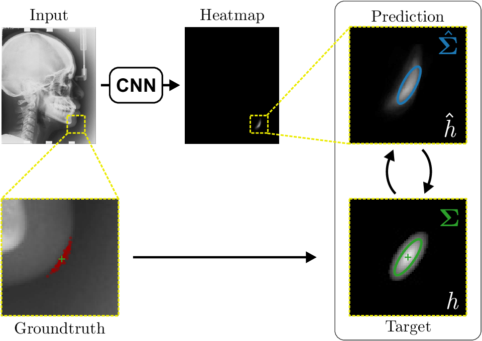 Figure 1 for Modeling Annotation Uncertainty with Gaussian Heatmaps in Landmark Localization