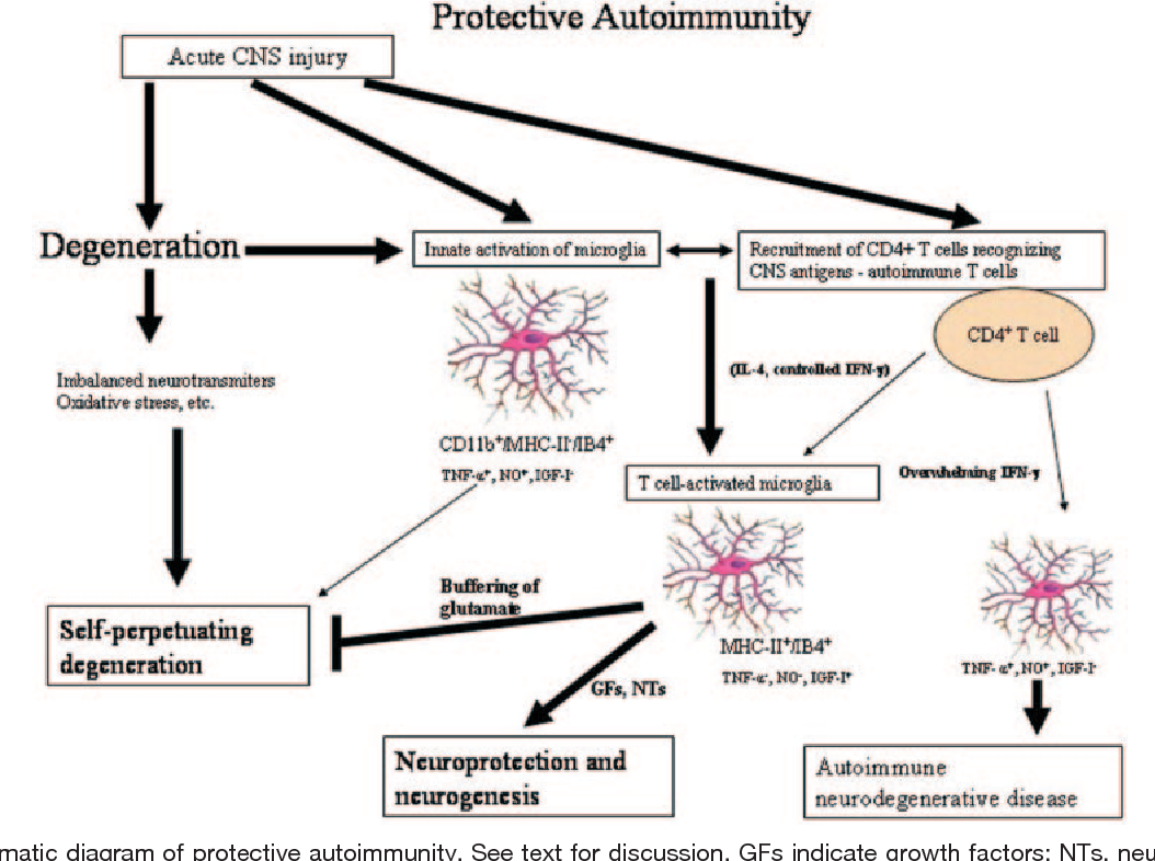 Figure 3. Schematic diagram of protective autoimmunity. See text for discussion. GFs indicate growth factors; NTs, neurotrophins. Contributed by Michal Schwartz, PhD, Weizmann Institute of Science, Israel.