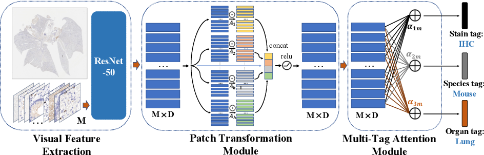 Figure 1 for Patch Transformer for Multi-tagging Whole Slide Histopathology Images