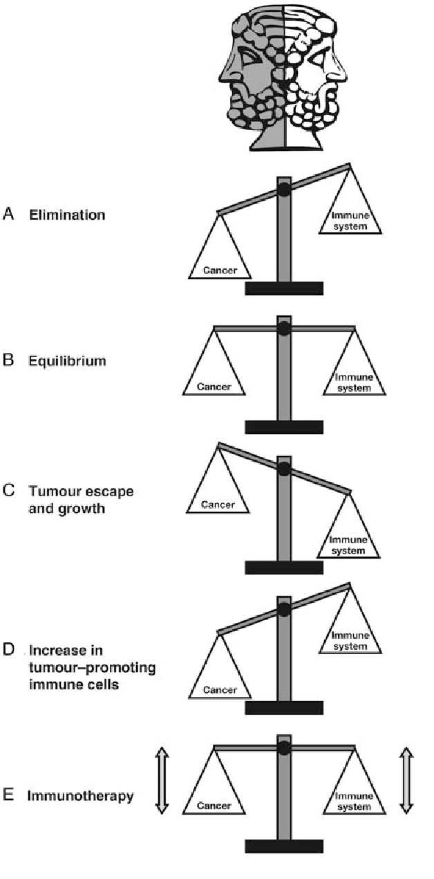 Immuno Oncology Understanding The Function And Dysfunction Of The