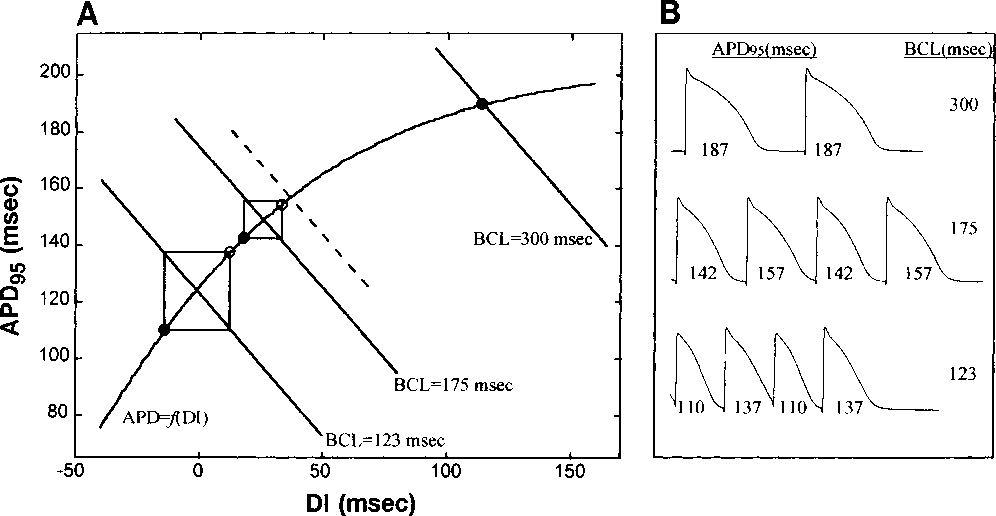 Figure 4 from Dynamic restitution of action potential