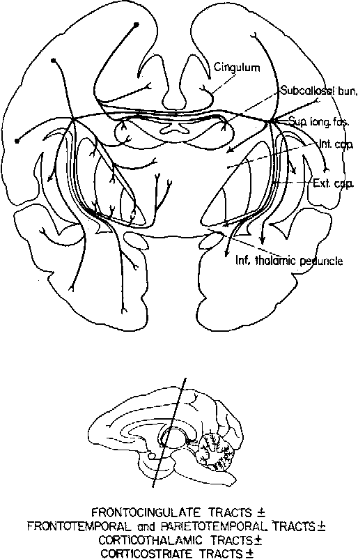 Figure 5 From Soma Tovisceral Motor Patterns In The Insu 1 A T 2