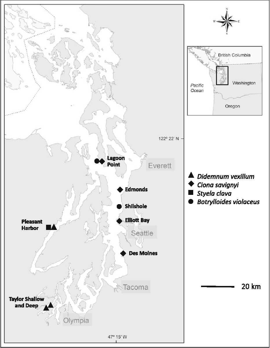Ecological implications of invasive tunicates associated with ...