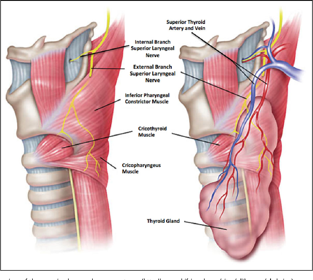 A Multicenter Review Of Superior Laryngeal Nerve Injury Following