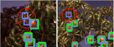 Figure 4 for Monocular Camera Based Fruit Counting and Mapping with Semantic Data Association