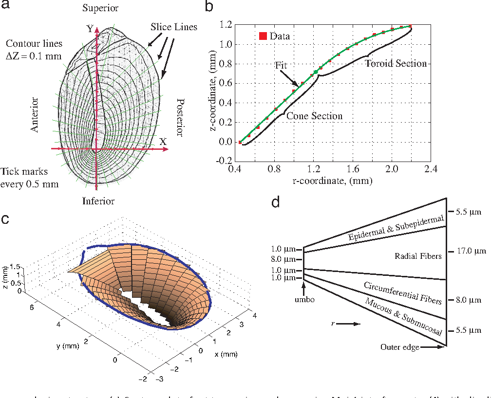 eardrum anatomy and microstructure  (a) contour plot of cat