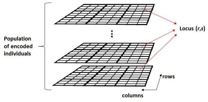 Figure 2 for Genetic Transfer or Population Diversification? Deciphering the Secret Ingredients of Evolutionary Multitask Optimization