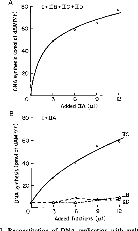 Figure 7 from virus 40 dna replication in vitro of leading and figure 2 ccuart Image collections