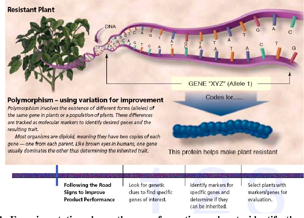 Figure 4 from Genetic markers - a cutting-edge technology in herbal