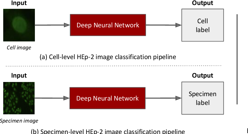 Figure 4 for Deep Learning based HEp-2 Image Classification: A Comprehensive Review