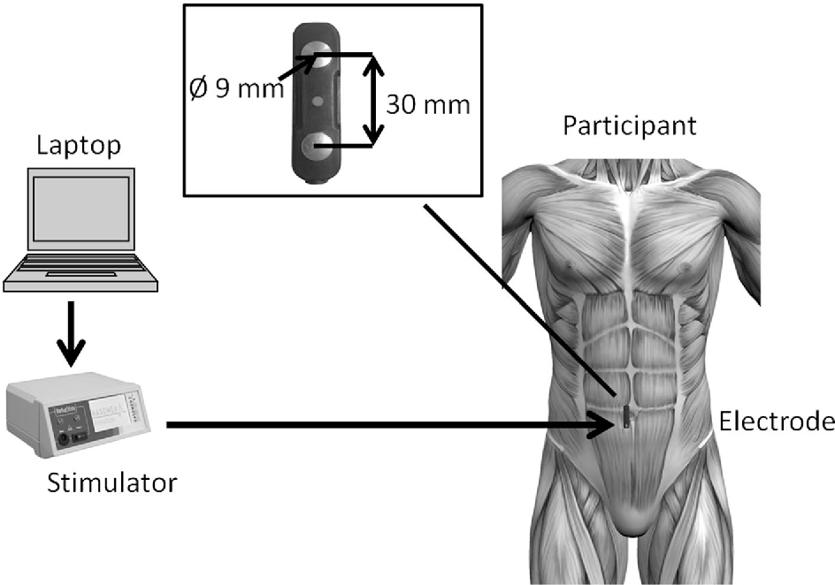 Detection Of The Motor Points Of The Abdominal Muscles Semantic