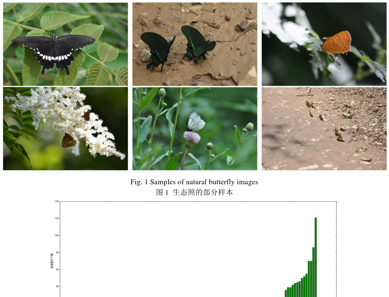 Figure 1 for The Automatic Identification of Butterfly Species