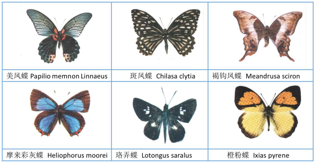 Figure 2 for The Automatic Identification of Butterfly Species