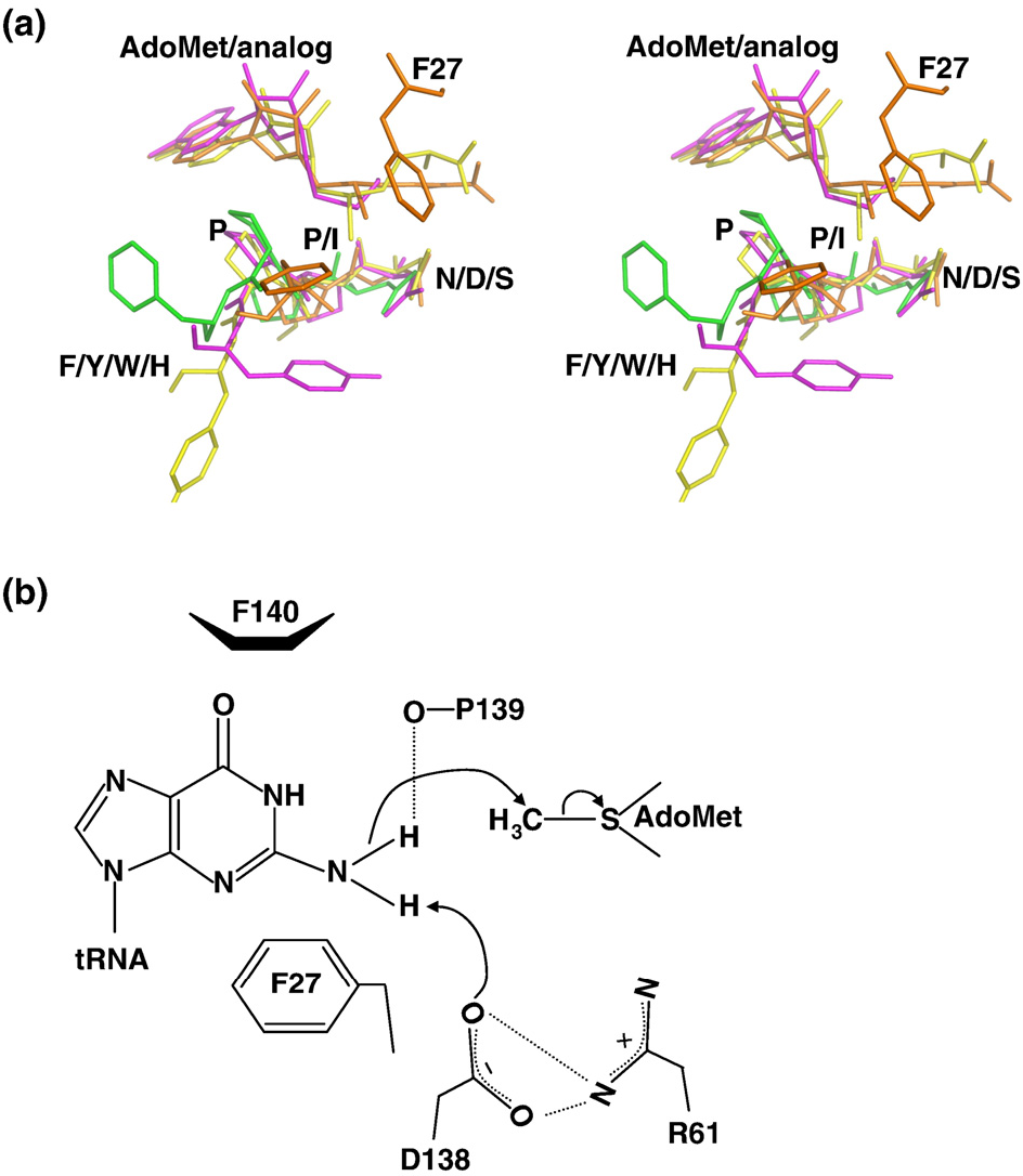 Figure 7 From Crystal Structure Of TRNA N2N2 Guanosine