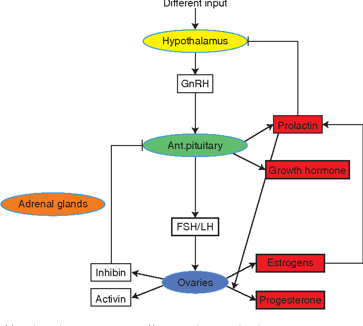 Figure 1 From Hormone Action In The Mammary Gland Semantic Scholar