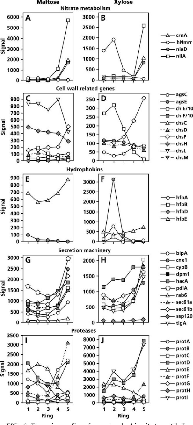 Spatial differentiation in the vegetative mycelium of Aspergillus ...
