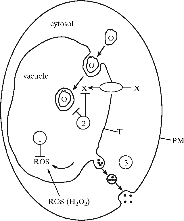 Role Of The Vacuole In The Redox Homeostasis Of Plant Cells