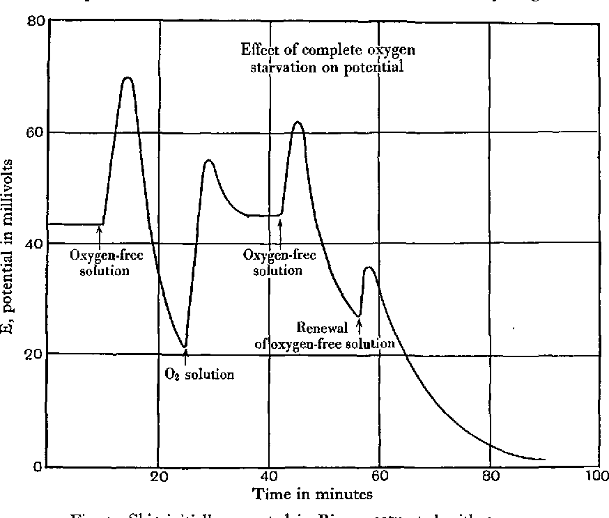 Figure 3 From The Electrical Properties Of Frog Skin Part I