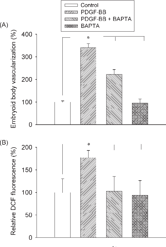 Figure 6 Effects of chelation of intracellular Ca2þ on the vascularization of embryoid bodies achieved with PDGF-BB (A) and on PDGF-BB-induced ROS generation (B). BAPTA/AM (10 mM) was present during the time of incubation with PDGF-BB. In the presence of BAPTA/AM, the stimulation of vascularization of embryoid bodies was significantly inhibited, whereas BAPTA per se did not impair vasculogenesis. The increase in ROS generation achieved with PDGF-BB was totally abolished in the presence of BAPTA/AM. *P , 0.05, significantly different as indicated.