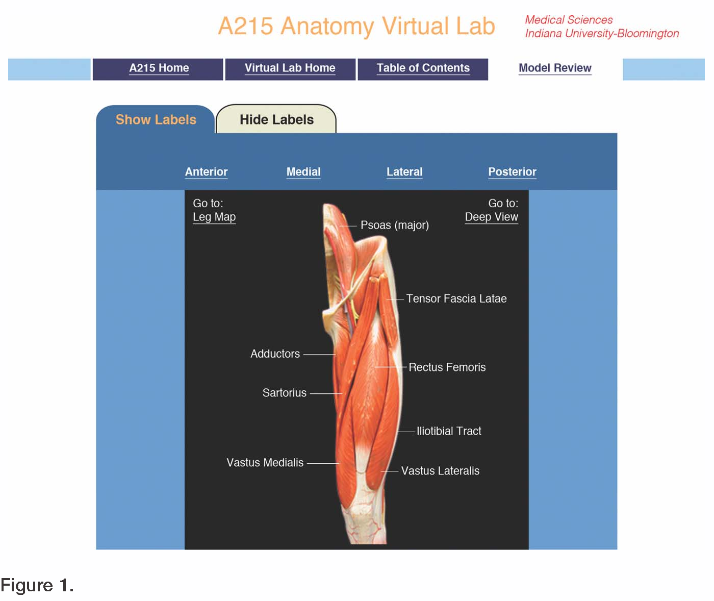 Figure 1 from The virtual anatomy laboratory: usability testing to ...