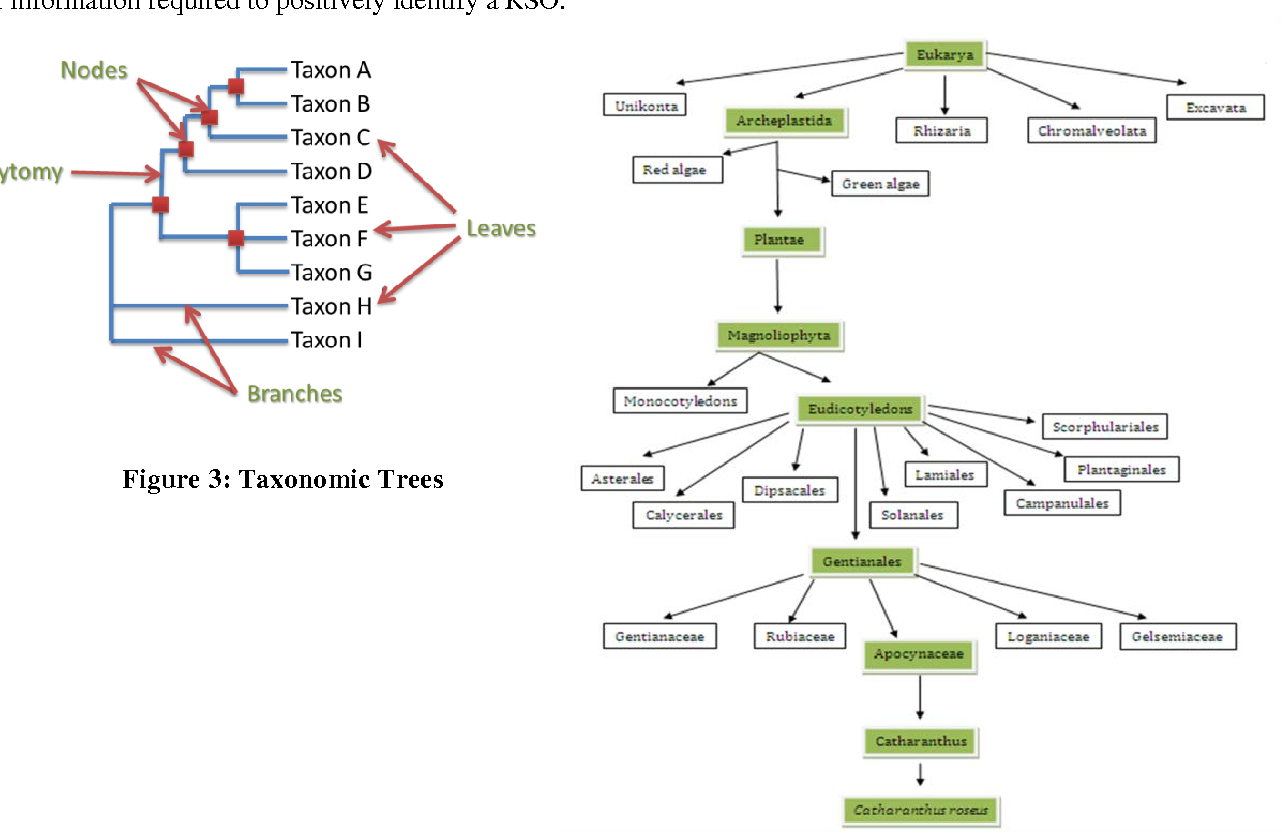 Figure 3: Taxonomic Trees