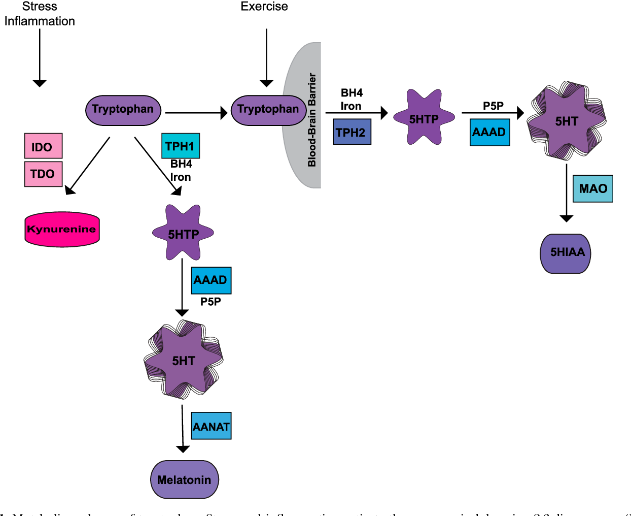 Vitamin N Deficiency Linked To Adhd >> Figure 1 From Vitamin D And The Omega 3 Fatty Acids Control