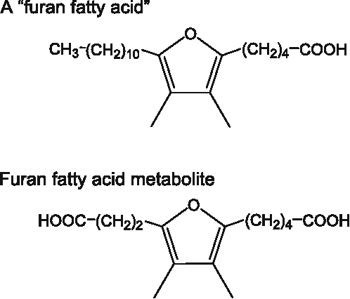 FIG. 5. Natural compounds chemically related to 1: A Bfuran fatty acid^ and the product obtained from it after metabolism by a rat (see text).