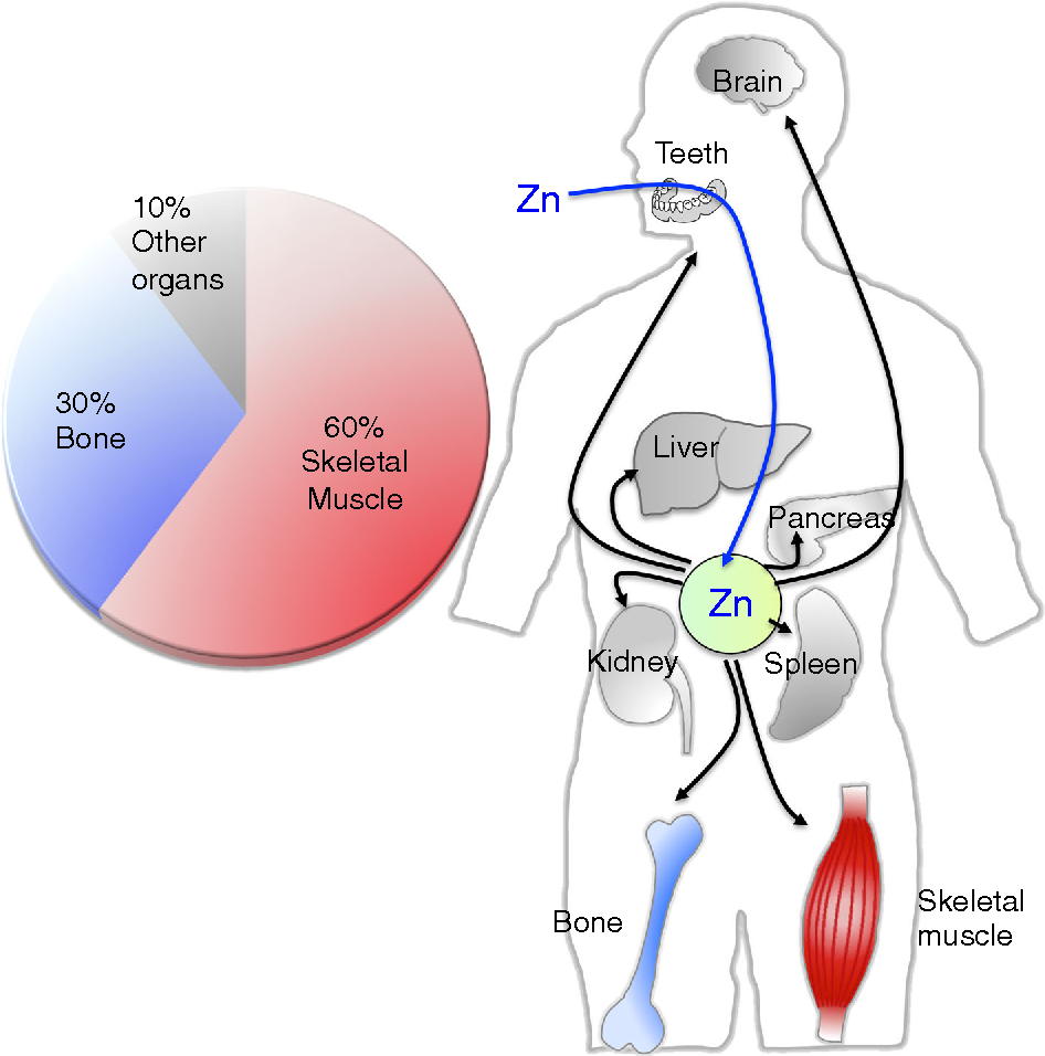 Physiological roles of zinc transporters: molecular and genetic ...